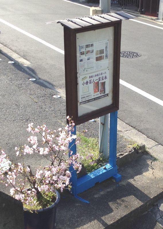 ***満開の小さな 桜木***