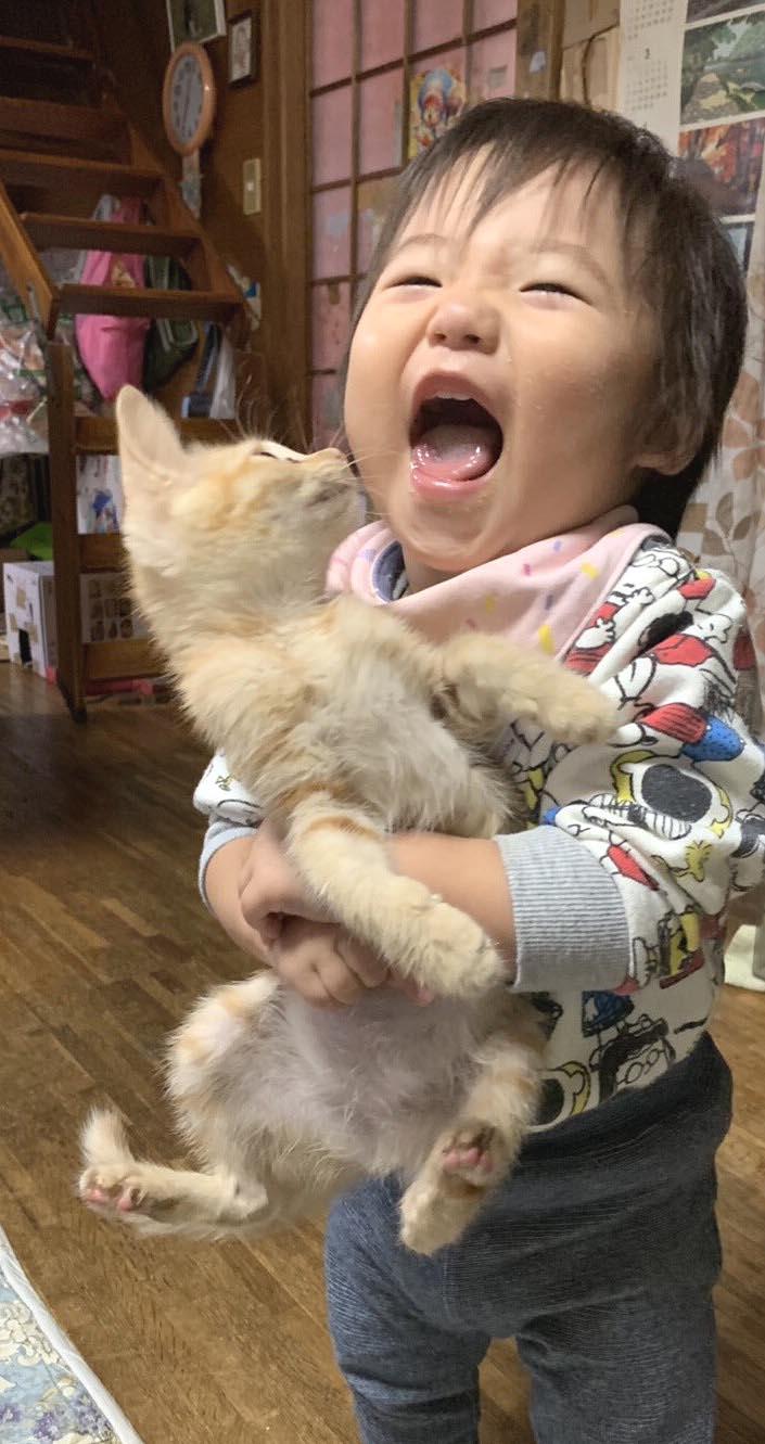 ◎仔猫の天敵は、こども?!