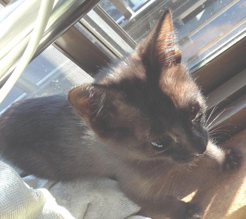 ◎黒猫~~ウニクロ~~ユニクロ も 京・手作り市を応援します。♪京都・海文舎がんばって!!