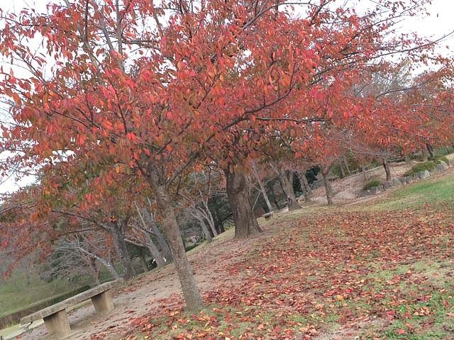 **京都・精華町♪(奈良と京都の境目のいい所)**
