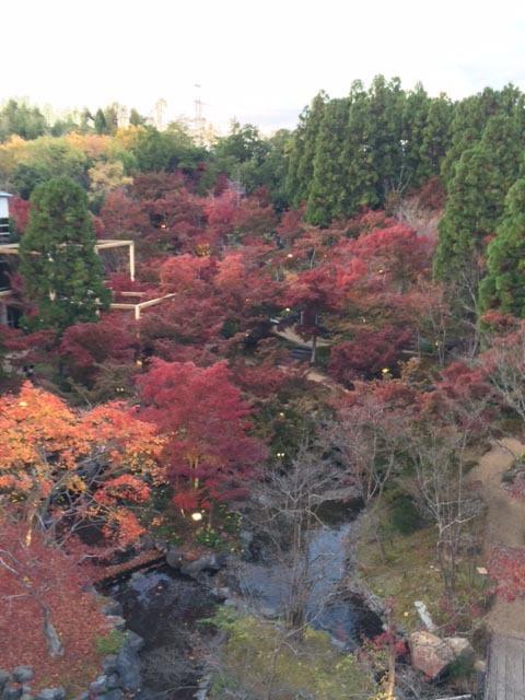**京と奈良の境目*京都精華町*の紅葉**