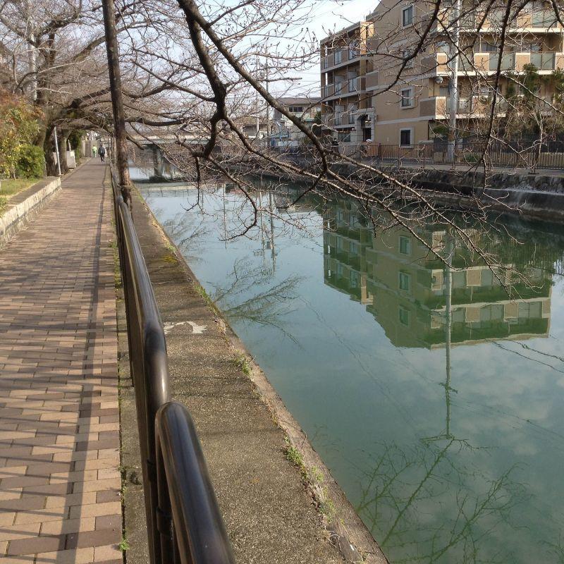 琵琶湖疏水に水が戻りました。