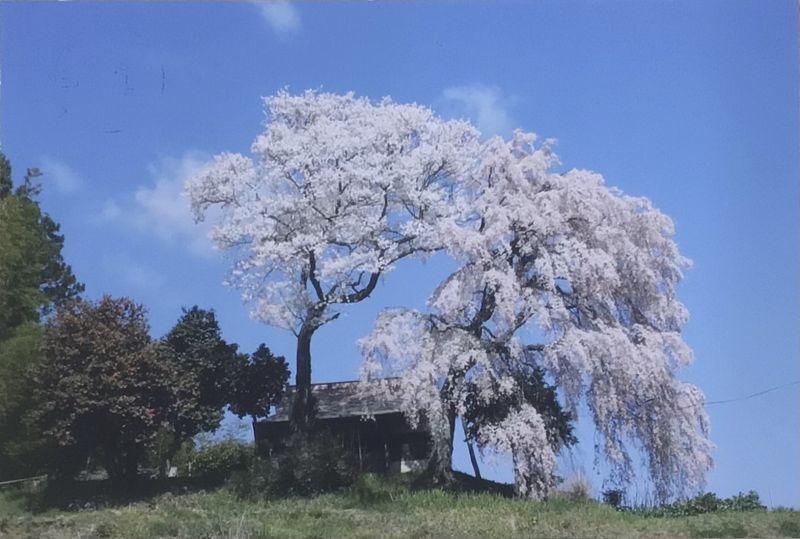 桜に見守られる町 ~福島県田村市船引町~