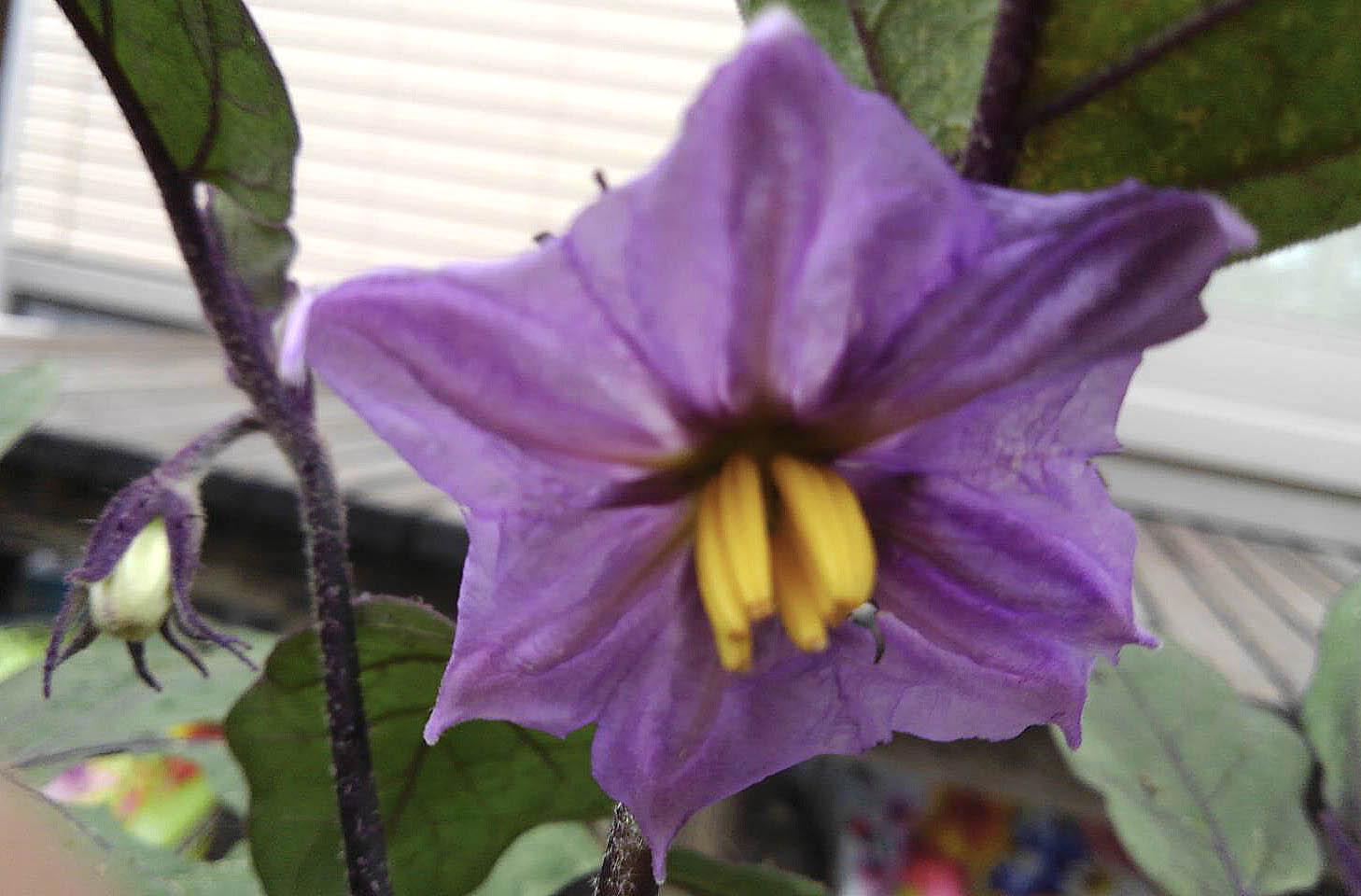 四つの花の名前を正解した、ら素敵な豆本をさしあげます。 3番目の花