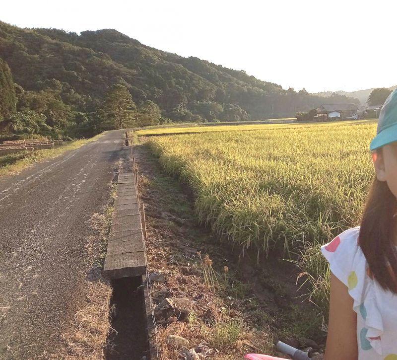 ◎無事に稲刈ができます。 鹿児島県出水市